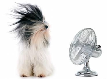 Σκύλος καλοκαίρι και ζέστη Πως να τον βοηθήσω