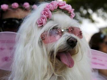 Woofland – Σκύλος με στολή – Αστείες φωτογραφίες σκύλων 2