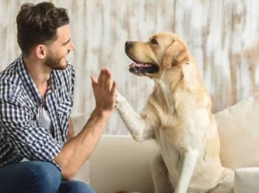 Σκύλος & επιθετικότητα: Δεν φταίει η φυλή αλλά ο κηδεμόνας