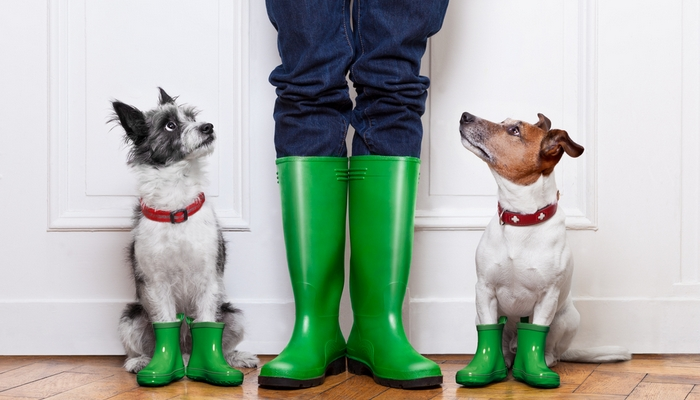 Woofland - Συμβουλές για να βγάλω τον σκύλο μου βόλτα στη βροχή