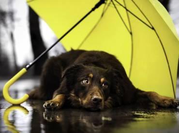 Συμβουλές για να βγάλω τον σκύλο μου βόλτα στη βροχή