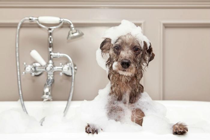 Συνταγή σαμπουάν για σκύλους – Φροντίδα και υγεία σκύλων