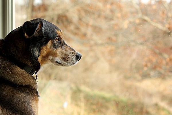 Woofland - Τα παιδιά σχολείο ο σκύλος σπίτι - Άνθρωπος και σκύλος