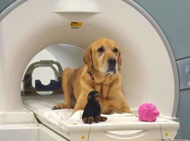 Τεστ για το εάν ένα κουτάβι γίνει καλός σκύλος εργασίας