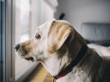 Τι είναι το άγχος αποχωρισμού στο σκύλο; Εκπαίδευση σκύλου