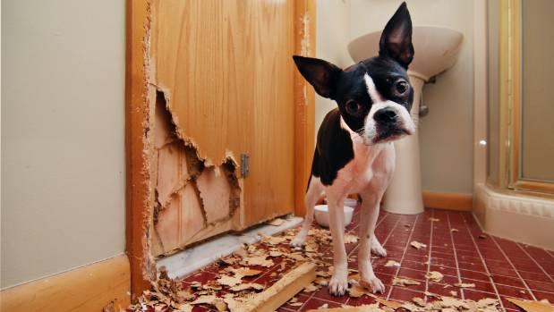 Woofland - Τι είναι το άγχος αποχωρισμού στον σκύλο - Συμπεριφορισμός και εκπαίδευση σκύλου