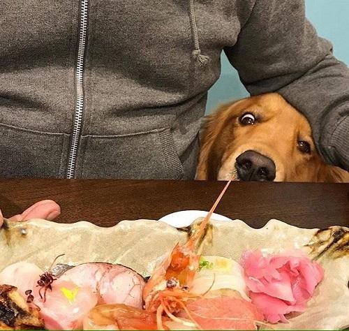 Woofland - Τι κάνει ο σκύλος μου όταν τρώω - Γουφαμάρες - Αστείες φωτογραφίες σκύλων 3