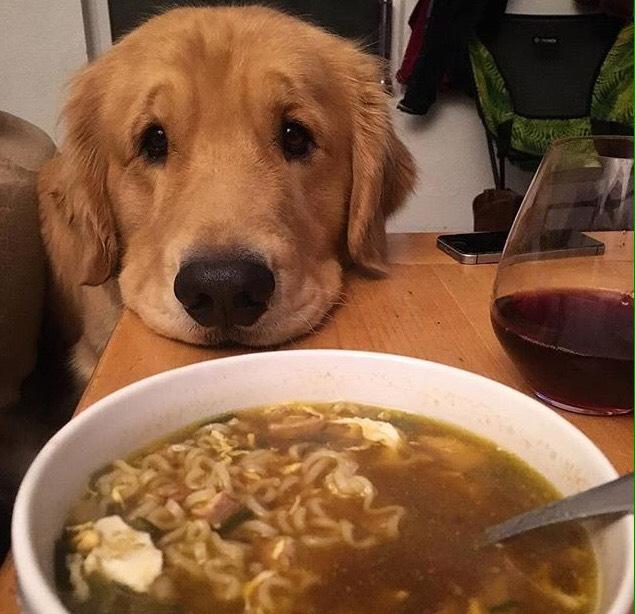 Woofland - Τι κάνει ο σκύλος μου όταν τρώω - Γουφαμάρες - Αστείες φωτογραφίες σκύλων 4