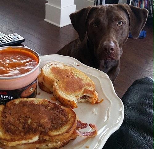 Woofland - Τι κάνει ο σκύλος μου όταν τρώω - Γουφαμάρες - Αστείες φωτογραφίες σκύλων 6