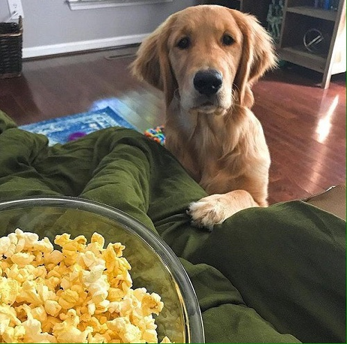 Woofland - Τι κάνει ο σκύλος μου όταν τρώω - Γουφαμάρες - Αστείες φωτογραφίες σκύλων 8