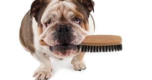 Woofland - Τι να κάνω για να μη μυρίζει ο σκύλος μου - Φροντίδα και υγεία σκύλων