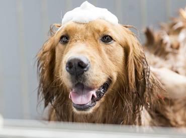 Τι να κάνω για να μη μυρίζει ο σκύλος μου – Woofland