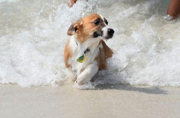Woofland - Τι φοβάται ο σκύλος μου - Αστείες φωτογραφίες σκύλων - Γουφαμάρες 10