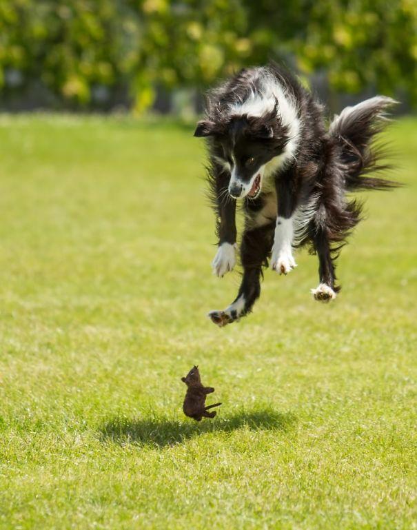 Woofland - Τι φοβάται ο σκύλος μου - Αστείες φωτογραφίες σκύλων - Γουφαμάρες 2