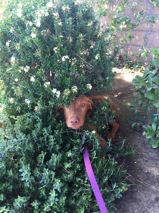 Woofland - Τι φοβάται ο σκύλος μου - Αστείες φωτογραφίες σκύλων - Γουφαμάρες 4