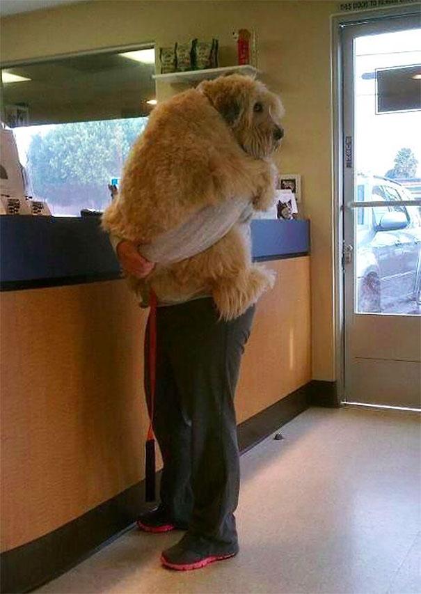Woofland - Τι φοβάται ο σκύλος μου - Αστείες φωτογραφίες σκύλων - Γουφαμάρες 5