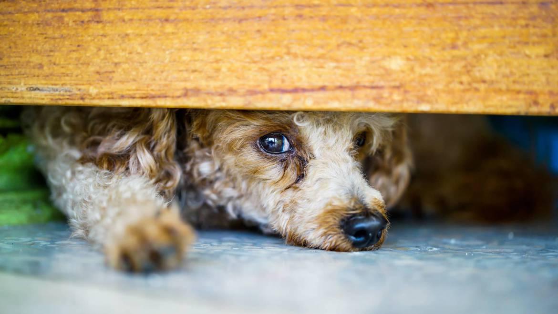 Τι φοβάται ο σκύλος μου vol2 – Αστείες φωτογραφίες Woofland