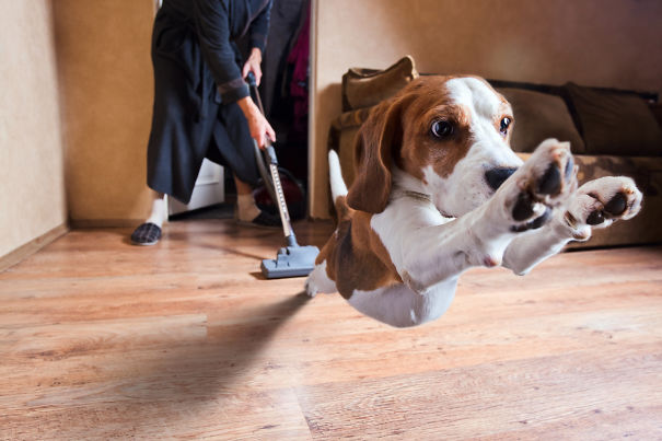 Woofland – Τι φοβάται ο σκύλος σας – Αστείες φωτογραφίες