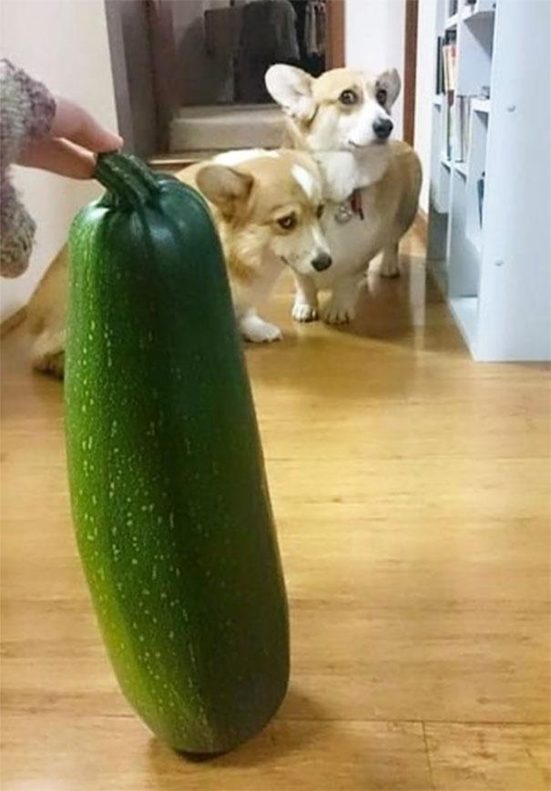 Woofland  - Τι φοβάται ο σκύλος σας - Αστείες φωτογραφίες σκύλων - Γουφαμάρες 10