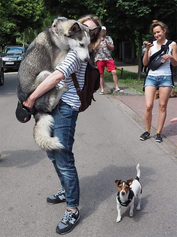 Woofland  - Τι φοβάται ο σκύλος σας - Αστείες φωτογραφίες σκύλων - Γουφαμάρες 11