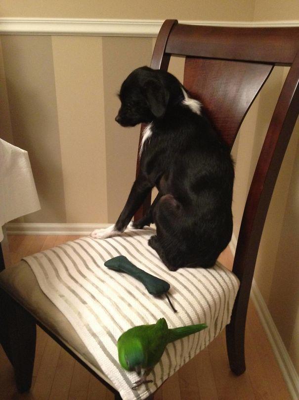 Woofland - Τι φοβάται ο σκύλος σας - Αστείες φωτογραφίες - Γουφαμάρες 3