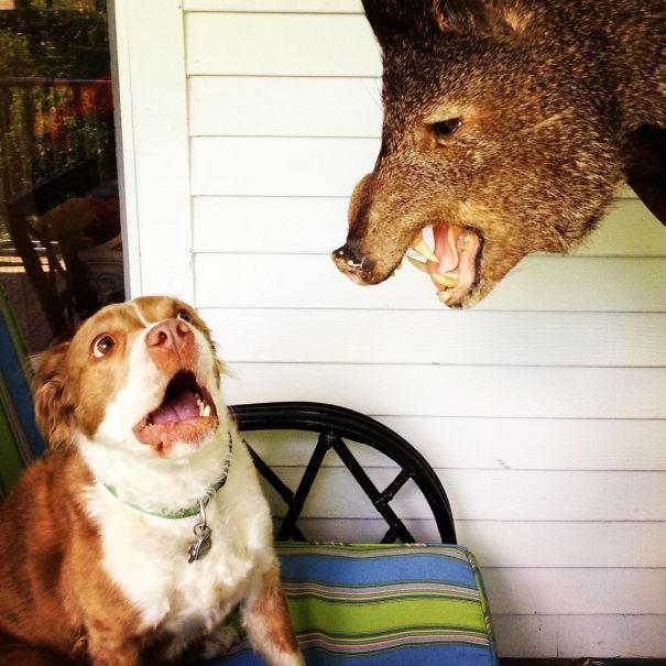 Woofland - Τι φοβάται ο σκύλος σας - Αστείες φωτογραφίες - Γουφαμάρες 4