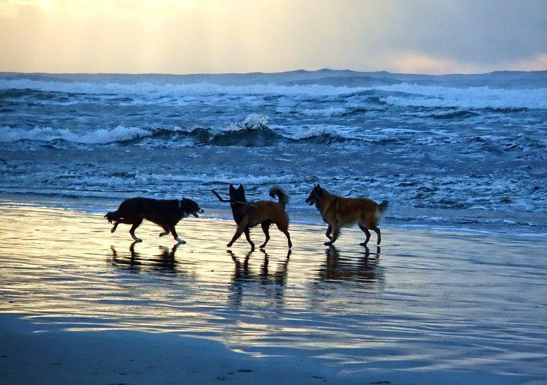 Woofland - Το τέλειο πάρκο μέσα από τα μάτια ενός σκύλου - Γουφαμάρες 1β