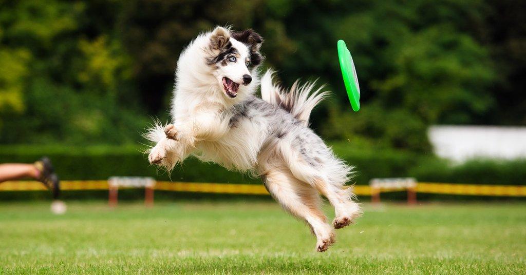 Woofland - Το τέλειο πάρκο μέσα από τα μάτια ενός σκύλου - Γουφαμάρες 1γ