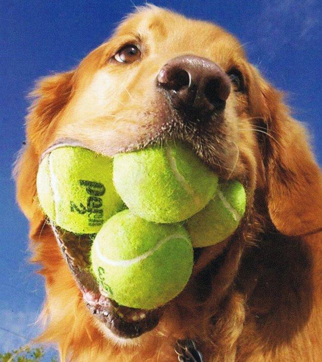 Woofland - Το τέλειο πάρκο μέσα από τα μάτια ενός σκύλου - Γουφαμάρες 3α