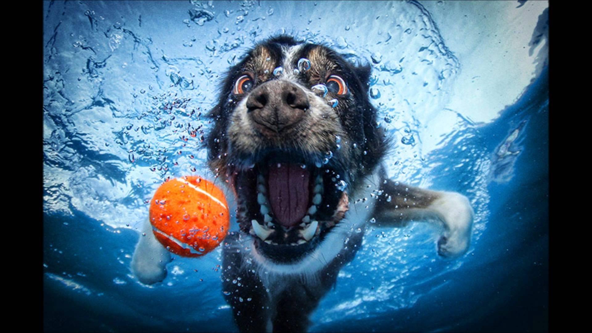 Woofland - Το τέλειο πάρκο μέσα από τα μάτια ενός σκύλου - Γουφαμάρες 3β