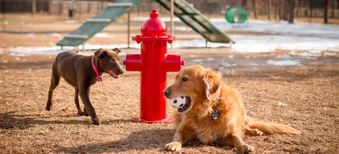 Woofland - Το τέλειο πάρκο μέσα από τα μάτια ενός σκύλου - Γουφαμάρες 4a
