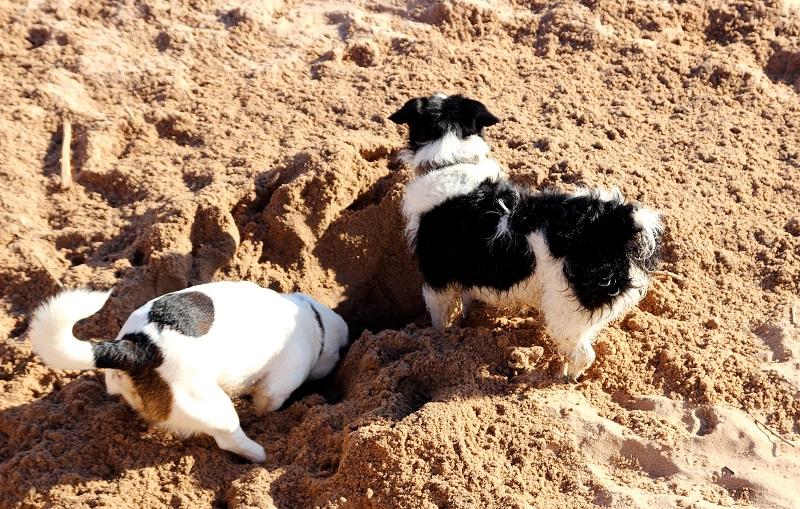 Woofland - Το τέλειο πάρκο μέσα από τα μάτια ενός σκύλου - Γουφαμάρες 5β