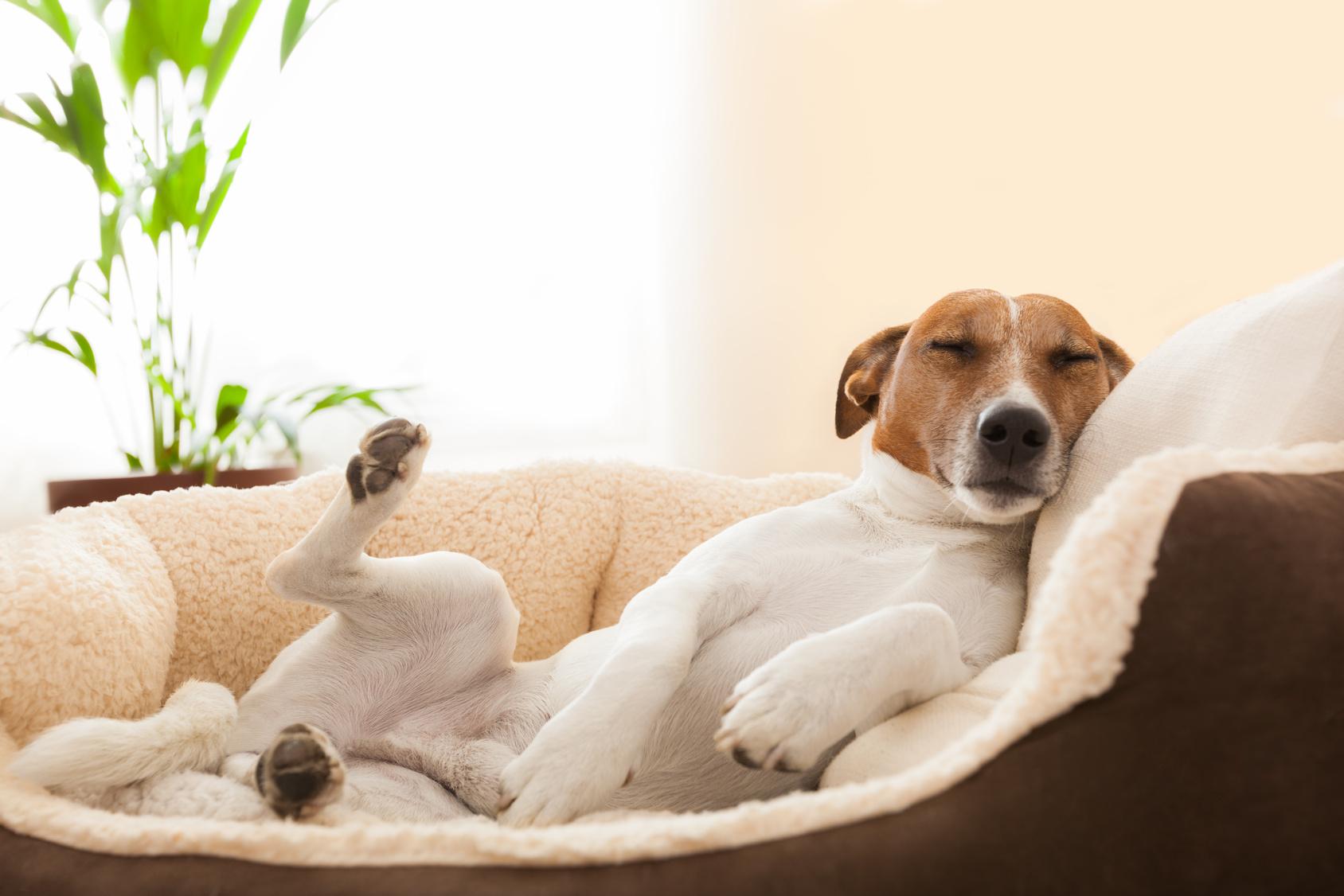 Woofland - Το τέλειο πάρκο μέσα από τα μάτια ενός σκύλου - Γουφαμάρες 6α