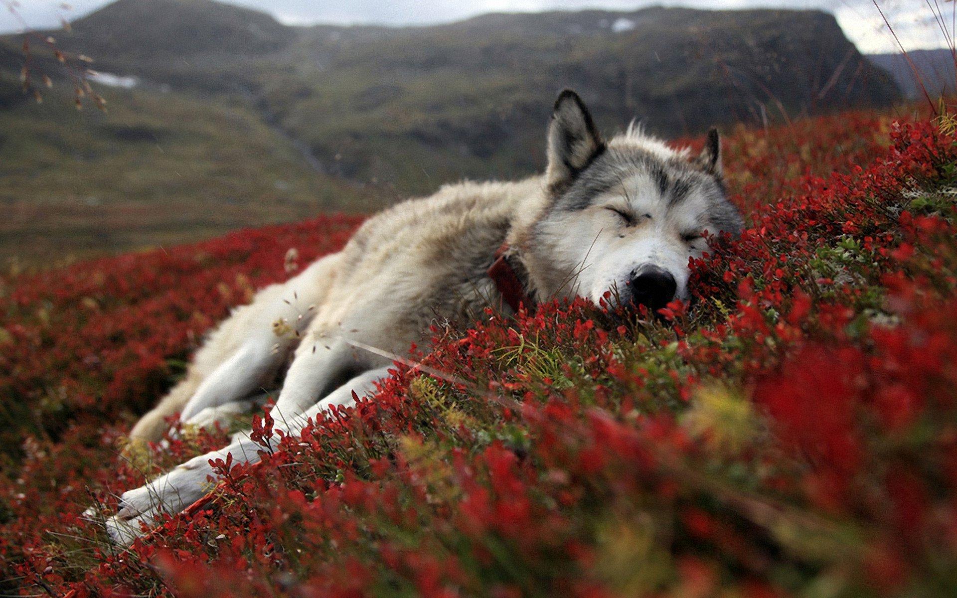 Woofland - Το τέλειο πάρκο μέσα από τα μάτια ενός σκύλου - Γουφαμάρες 8