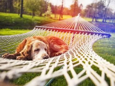 Woofland – Το τέλειο πάρκο μέσα από τα μάτια ενός σκύλου