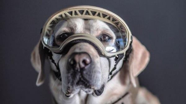 Φρίντα: Σκύλος διασώστης συνταξιοδοτείται