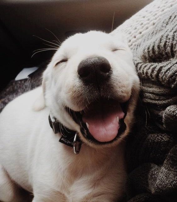 Χαμογελούν οι σκύλοι μας; – Επιστήμη και ενημέρωση