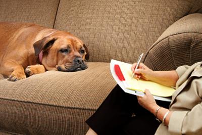 Woofland - Ψυχολογία σκύλου - Μπείτε μέσα στο κεφάκι του σκύλου σας - Επιστήμη και ενημέρωση