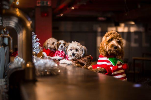 Woofland - Γιατί ο σκύλος μου λατρεύει τα Χριστούγεννα
