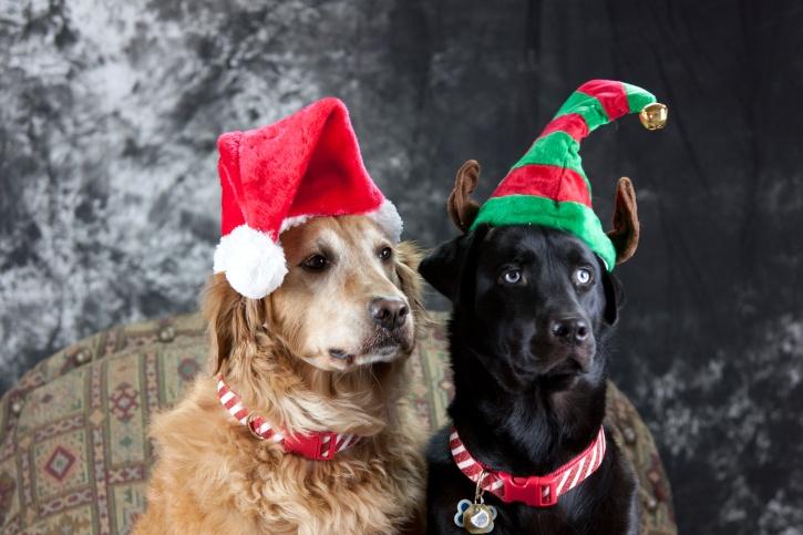 Γιατί ο σκύλος μου λατρεύει τα Χριστούγεννα