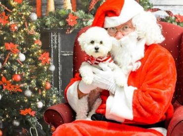 10 Σκυλάκια με τον Αϊ Βασίλη – Αστείες φωτογραφίες σκύλων