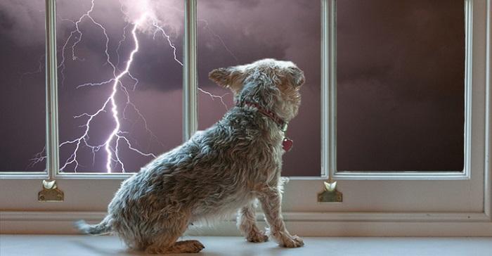 Woofland - 10 φοβίες των σκύλων - Επιστήμη και ενημέρωση 8