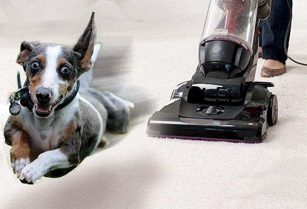 Woofland - 10 φοβίες των σκύλων - Επιστήμη και ενημέρωση 10