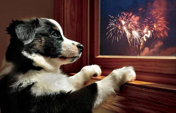 Woofland - 10 φοβίες των σκύλων - Επιστήμη και ενημέρωση 2