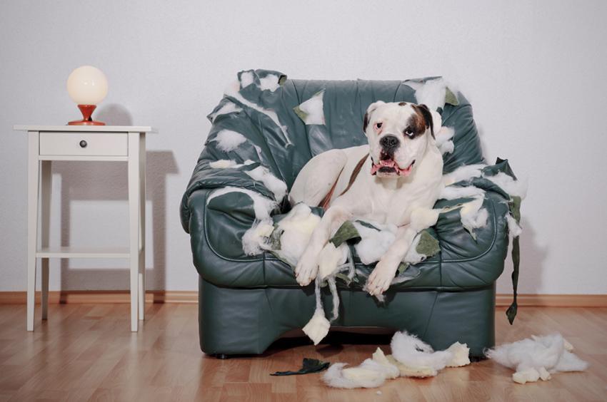 Woofland - 10 φοβίες των σκύλων - Επιστήμη και ενημέρωση 3
