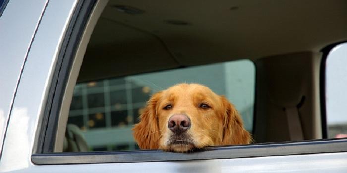 Woofland - 10 φοβίες των σκύλων - Επιστήμη και ενημέρωση 5
