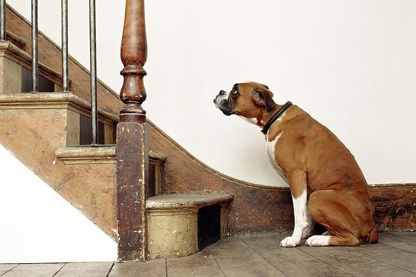 Woofland - 10 φοβίες των σκύλων - Επιστήμη και ενημέρωση 6