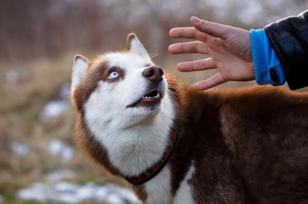 Woofland - 10 φοβίες των σκύλων - Επιστήμη και ενημέρωση 7