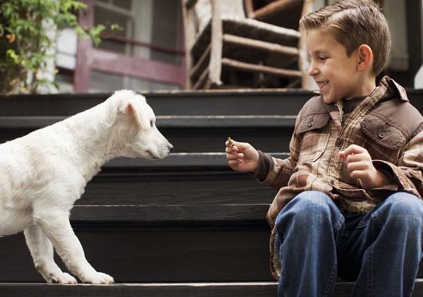 Woofland - 10 φοβίες των σκύλων - Επιστήμη και ενημέρωση 9