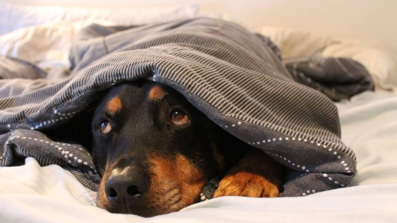 10 φοβίες των σκύλων – Επιστήμη και ενημέρωση – Woofland